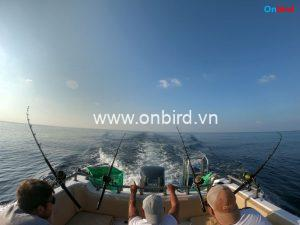 Phu Quoc Deep-sea fishing - big game trolling