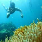Snorkeling at Phu Quoc Half-moon Reef