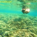 Phu Quoc Coral Mountain - Phu Quoc Snorkeling