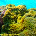 Phu Quoc U-Turn - Top snorkeling site