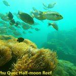 Phu Quoc Anemone fish - Phu Quoc snorkeling trip