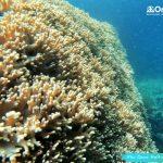 珊瑚覆盖的悬崖在半月珊瑚礁-富国岛浮潜 -潜水游览