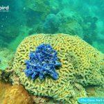 Phu Quoc touristy-avoiding snorkeling tour to explore Half-moon Reef - Brain coral