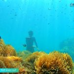 Phu Quoc touristy-avoiding snorkeling tour to explore Anemone at Half-moon Reef