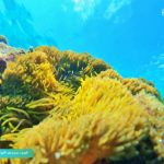 Phu Quoc snorkeling - Anemone at Shallow Reef