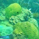 Phu Quoc U-Turn - Top snorkeling - diving sites